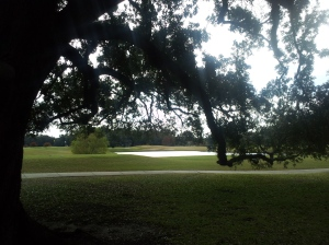 New Orleans Trees~Audubon Park